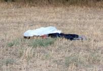 CUMHURIYET ÜNIVERSITESI - Koyunların tarlaya girmesine sinirlendi, iki kardeşi öldürdü