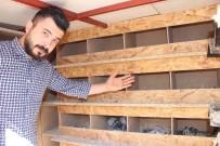 BULDUK - Kümesten 80 Bin TL'lik Güvercin Çaldılar