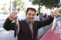 BALIK SEZONU - Kurban Bayramı Balıkçıları Vurdu