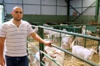 GENETIK - Bu Keçiler Üreticinin Yüzünü Güldürüyor