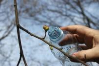BIYOLOJI - İtalya'dan Gelen Katil Arılara Karşı Ormanlara Böcek Salındı