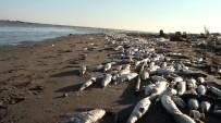 KIMYA - Mersin'de Balık Ölümleri İnceleniyor