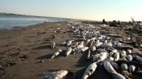 AYTUĞ ATICI - Tarsus Sahillerinde Binlerce Balık Öldü
