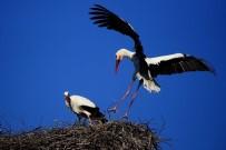 ELEKTRİK DAĞITIM ŞİRKETİ - UEDAŞ, Yeni Yapılan Tüm Elektrik Nakil Hatlarına 'Kuşları Koruma' Zorunluluğu Getirdi