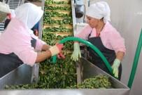 200 Tonla Başladığı Üretimi 4 Bin Tona Çıkartmayı Hedefliyor