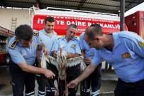 KUŞ CENNETİ - 2 bin 600 kilometre uçtu, Mersin'de vuruldu