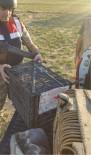 PARA CEZASI - Güroymak'ta Kaçak Avcılara Suçüstü