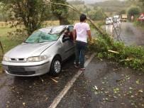 SAĞANAK YAĞIŞ - Otomobilin Üzerine Ağaç Devrildi Açıklaması 2 Yaralı