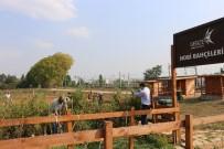 STRATEJI - GTÜ'de 'Hobi Bahçeleri' Projesinde Hasat Dönemi Başladı