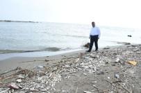 SEYHAN NEHRİ - Mersin'deki Balık Ölümleri