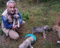 HAYVAN SEVERLER - Öğretmen, 9 Köpek Yavrusuna Sahip Çıktı