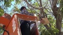 ÜNAL KOÇ - Gergüş'te Kamu Binalarının Bahçelerine Kuş Kafesleri Asıldı