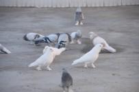 ÖĞRETMENLIK - Türkiye'de Bir İlk, Diyarbakır'da Güvercinler İçin Otel Kuruldu