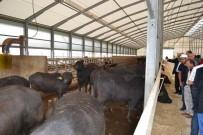 AFYON KOCATEPE ÜNIVERSITESI - 'Mandalar Mutlu Çiftçiler Umutlu' Projesi
