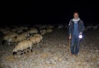HAYVAN - Çobanların Zorlu Gece Mesaisi