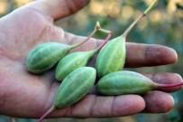 MİLYAR DOLAR - Doğadaki Sağlık Deposu Bitki 'Kapari'