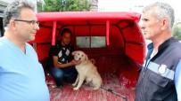 ZABITA MEMURU - Kaybettiği Köpeğini Tesadüfen İzlediği Görüntülerde Buldu