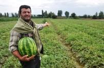GÜBRE - Organik Patatesten Sonra Karpuz Üretti, Tüm Türkiye'ye Sattı