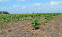 İCRA MÜDÜRLÜĞÜ - 500 Hükümlü, Organik Üretim Yaparak Cezalarını Çekecek