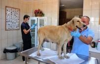 AMELİYATHANE - Kepez'de Her Ay Yüzlerce Hayvan Tedavi Ve Rehabilite Ediliyor