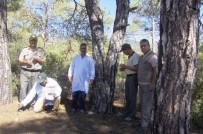 LABORATUVAR - Bin 250 Adet Zararlı Kabuk Böceği Yırtıcısı Ormana Bırakıldı