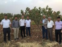 YUNUSLAR - Kurtalan'da Fıstık Ve Elma Hasadı Yapıldı