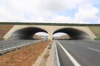HÜKÜMET - Kuzey Marmara Otoyolu Güzergahına 604 Bin Fidan Daha Dikilecek
