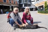 KURBAN BAYRAMı - Sokak Köpeğini Bıçaklayan Profesör Kayıplara Karıştı