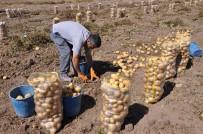 MUSTAFA ARSLAN - Alternatif Ürün Kapsamında Ekilen Patates Hasadına Başlandı