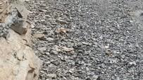 DAĞ KEÇİSİ - İspir'de Yaban Keçisi Ölü Olarak Bulundu