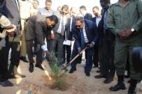 ORMAN YANGıNLARı - Orman Ve Su İşleri Bakanlığı'ndan Moritanya'ya Tohum Desteği