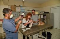 REHABİLİTASYON MERKEZİ - Hayvan Bakımevi Merkezi'nde 921 Hayvan Ameliyat Edildi
