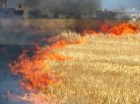 ANIZ YANGINI - Anız Yangınları Doğaya Zarar Veriyor