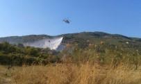 DOYRAN  - Balıkesir'de Zeytinlik Yangını
