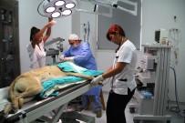 İLAÇ KULLANIMI - İlk Kadın Veteriner Cerrahlar Bir İlke İmza Atma Peşinde