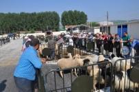 BOZÜYÜK BELEDİYESİ - Bozüyük Hayvan Pazarında Hareketlilik Başladı