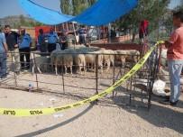 MEHMET DEMIR - Kurban Pazarında Bıçaklı Yer Kavgası, 3 Yaralı