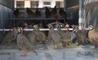 TARIM İLACI - 102 Bin 600 Keklik Ve Sülün Doğaya Salındı
