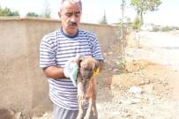 YAVRU KÖPEK - Köpeklerin Saldırdığı Yavru Köpek, Ambulansla Hayvan Hastanesine Kaldırıldı