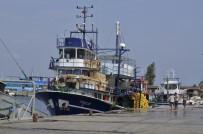 BALIK FİYATLARI - Marmara'da Hamsi Bereketi