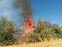 ESENLI - Akçadağ'da Yangın Açıklaması 100 Ağaç Kül Oldu