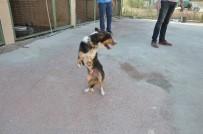 BOZÜYÜK BELEDİYESİ - Bozüyük'te 6 Ayaklı Köpek Hayvan Barınağının Maskotu Oldu