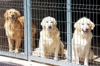 ANKARA ÜNIVERSITESI - Çankaya Belediyesi 154 Sokak Hayvanına Yuva Buldu