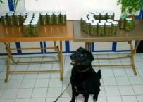 UYUŞTURUCU OPERASYONU - Zonguldak'ta Uyuşturucu Operasyonu