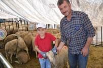 BOZÜYÜK BELEDİYESİ - Bozüyük Belediyesi Mezbahası Kurban Bayramına Hazır