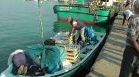 OLTA - Karadeniz'de Palamut Bolluğu