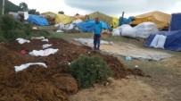 EYLEM PLANI - Kocaeli'de Kurban Satış Yerleri İlaçlanıyor