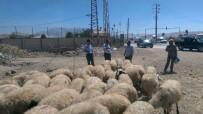 SAĞLIK RAPORU - Tuşba Belediyesi Zabıta Ekiplerinden Kurban Kesim Yerleri Ve Kurbanlık Denetimi