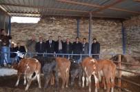 MERINOS - Bozdoğan'da 16 Genç Çiftçi Hibeden Faydalandı