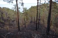 Çamburnu Sarı Çam Ormanları İlkbaharda Tekrar Yeşillenecek